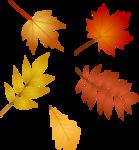 Осень61