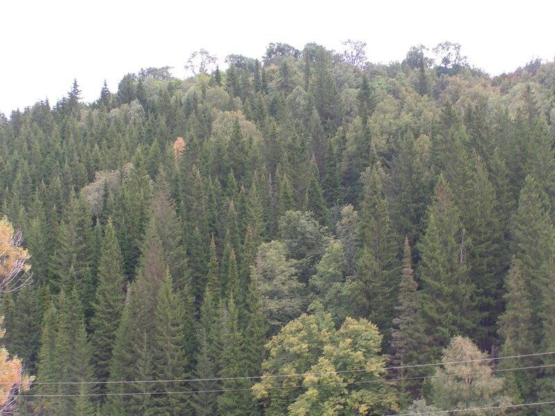 Смешаный лес на окрестных горах (04.07.2013)