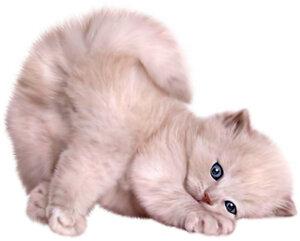 Котенок 2.jpg