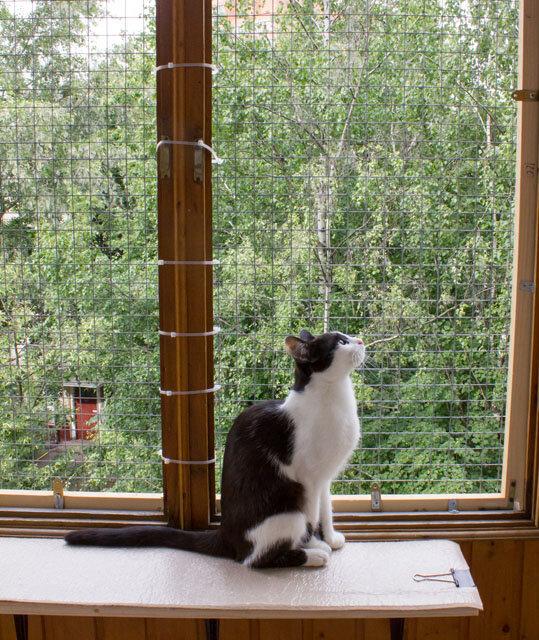 Сетка на балкон со старыми деревянными рамами.: ru_cats.