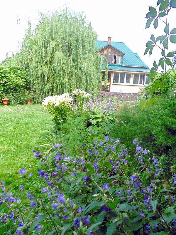 Лето в райском садике,колокольчики