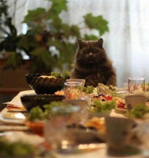 Коты после праздника