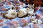 Флора, Шери и их котята