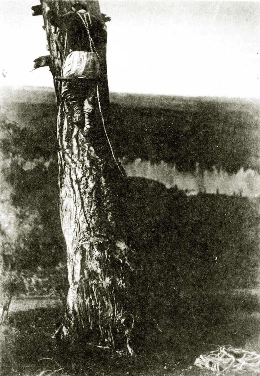 Белорус на лезвие осматривает ульи. Минская губ, Игуменский уезд
