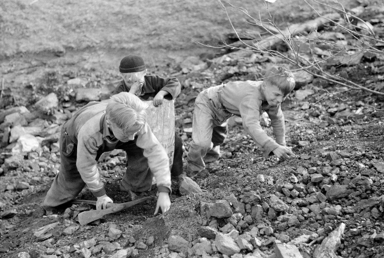 Подростки собирают уголь из отвалов шлаков во время майской забастовки 1939 года, Кемптон, Западная Вирджиния