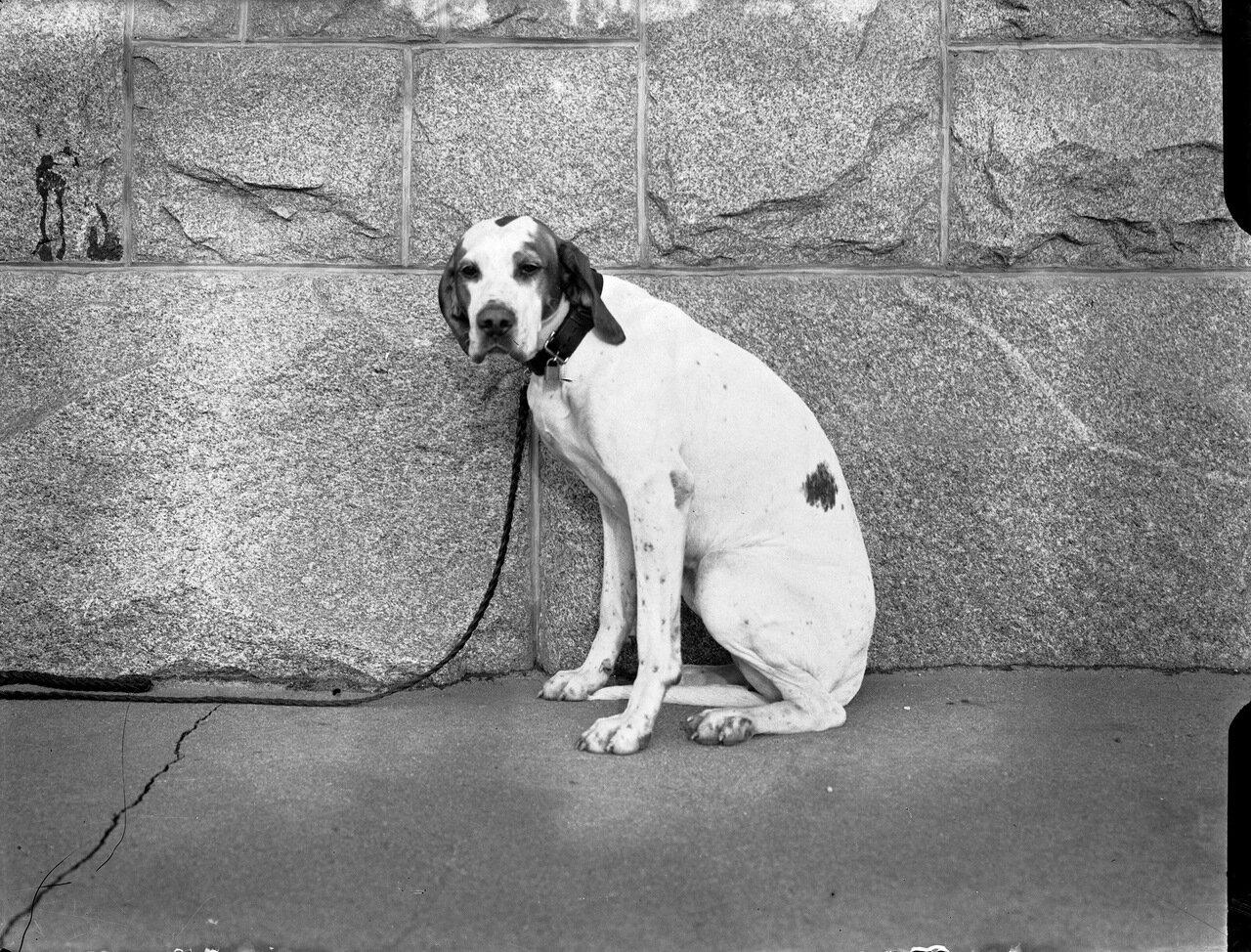 Собака на улицах города