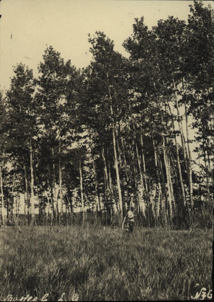 На поляне в березовой роще