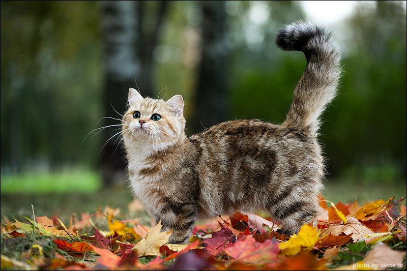 Картинки осень кошки