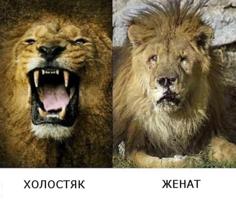 http://img-fotki.yandex.ru/get/9256/128733247.fa/0_126eb3_ffa905da_orig.jpg