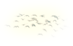 adieu_birds.png