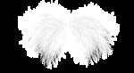 natali_design_dream_wings1.png