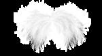 natali_design_dream_wings1b.png