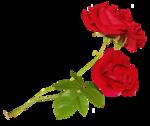 thaliris_flowers_el03.png