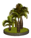 Palms  (32).png