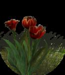 flor premade DW.png