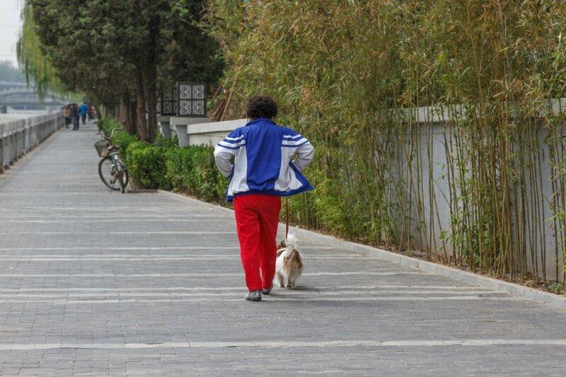 Дама с собачкой, Пекин