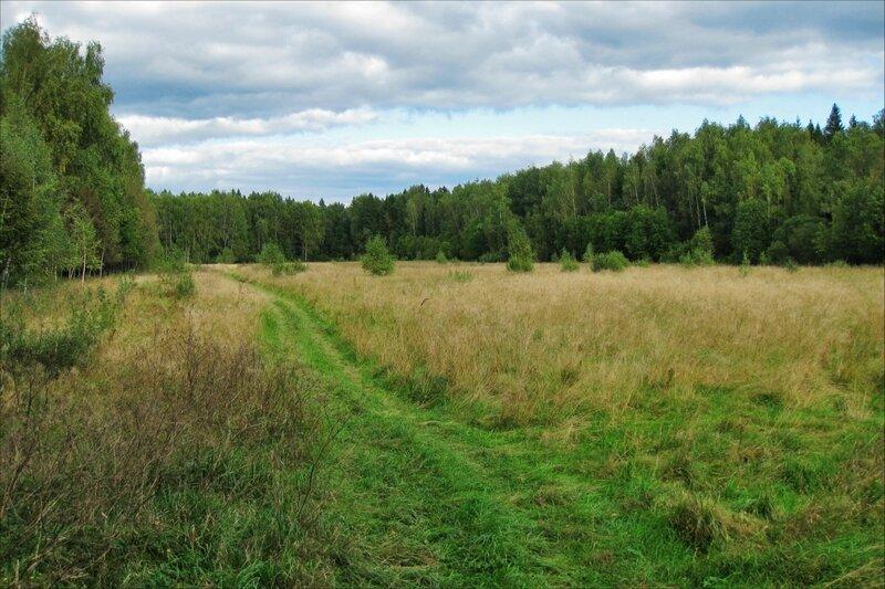 Закрытая поляна