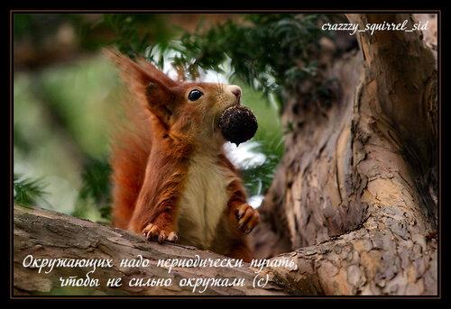 11873377_Jockei__pro_zagotovku2.jpg
