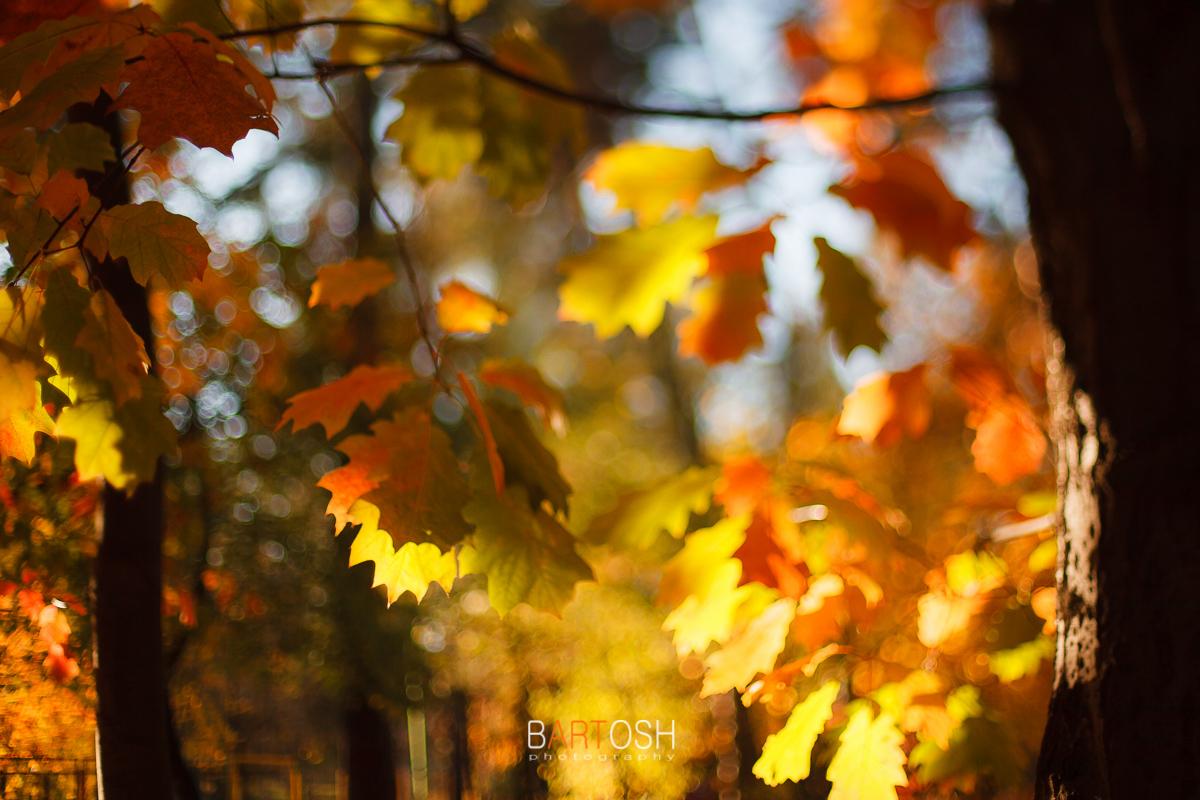 Осень в Киеве. Фотограф Дмитрий Бартош