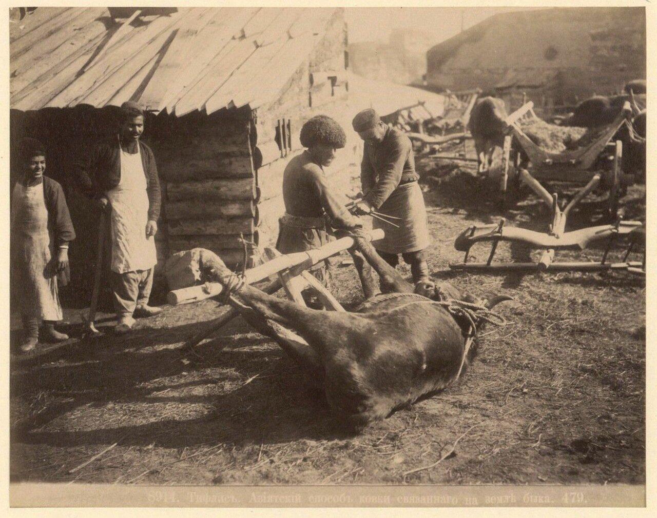 Азиатский способ ковки быка. 1890
