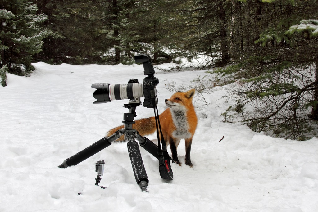 Fox photographer