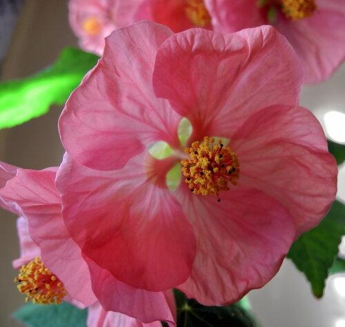 Цветок-огонек