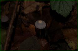 http://img-fotki.yandex.ru/get/9257/15842935.1e3/0_d9ac5_79cc8d65_orig.png