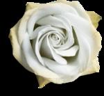 mzimm_onlyyou_rose_02_sh.png