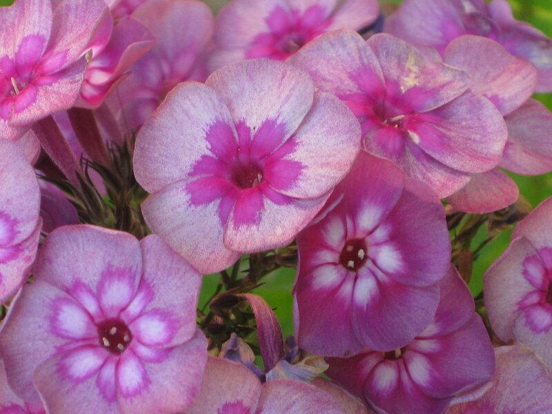 http://img-fotki.yandex.ru/get/9257/19735401.e7/0_829db_4789428f_XL.jpg