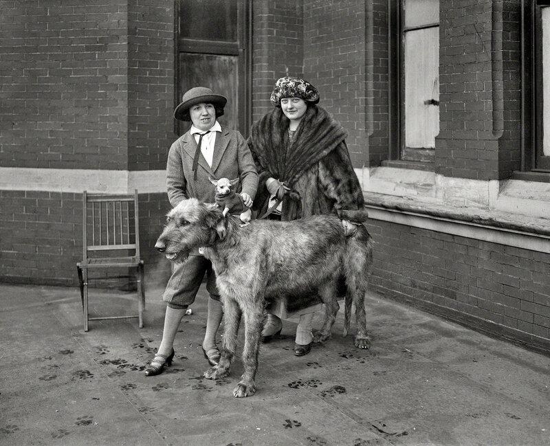 January 26, 1923. Washington, D.C. Largest and smallest dog at dog show