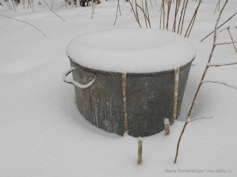 Снежок, Саратов, 09 января 2015 года