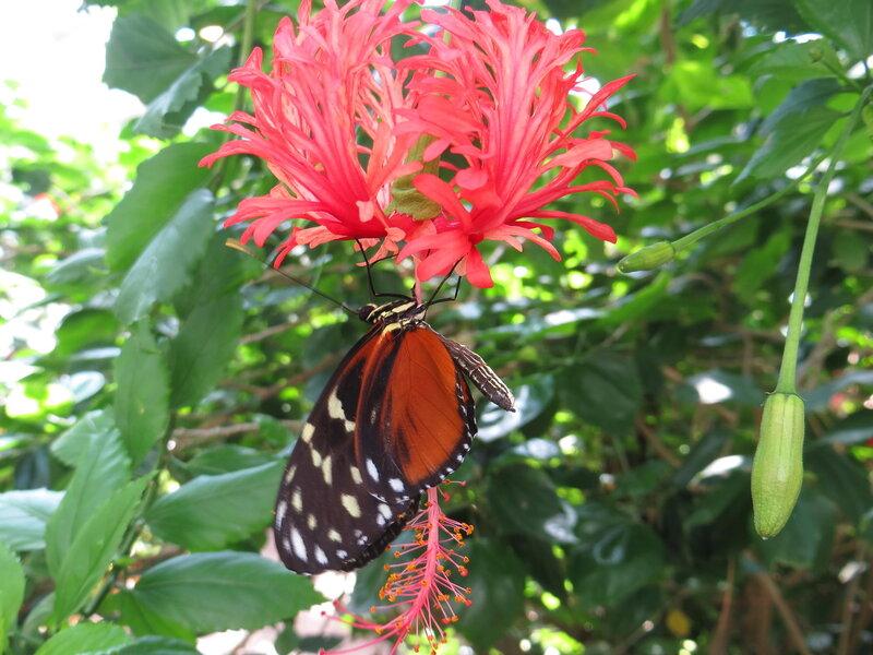 Вена (Австрия): Дом   бабочек  (Schmetterlinghaus) - 11