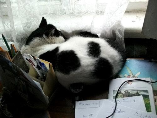 Барсик захватывает письменный стол