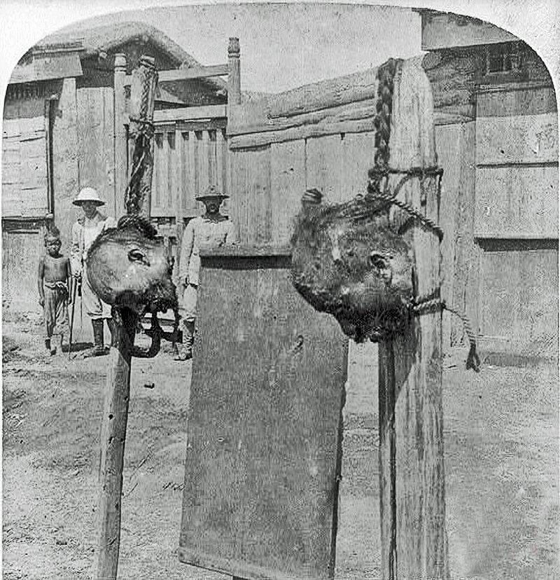 Головы повстанцев, установленные на шестах на улице, возле Западных Ворот в городе Тяньцзинь. 21 августа 1901 года