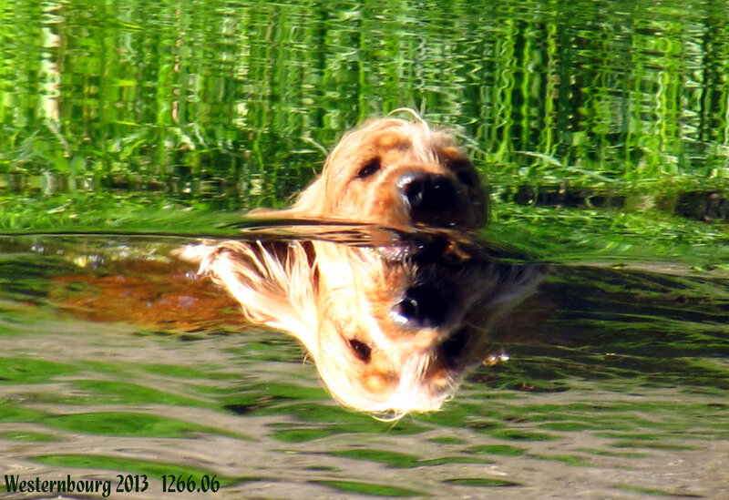 1266.06 Водяная собачка