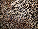Leopard (5).jpg
