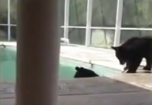 Незваные гости посетили жительницу Флориды