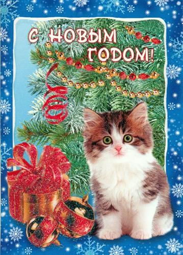 С Новым годом! Котенок сидит рядом с подарками
