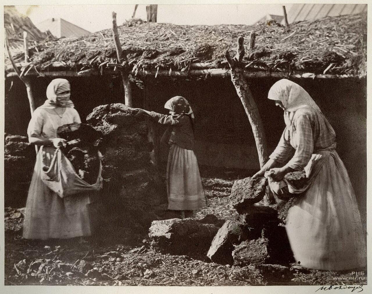 Казачки сносят кизяки в катух (сарай). Цымлянская станица. 1875-1876