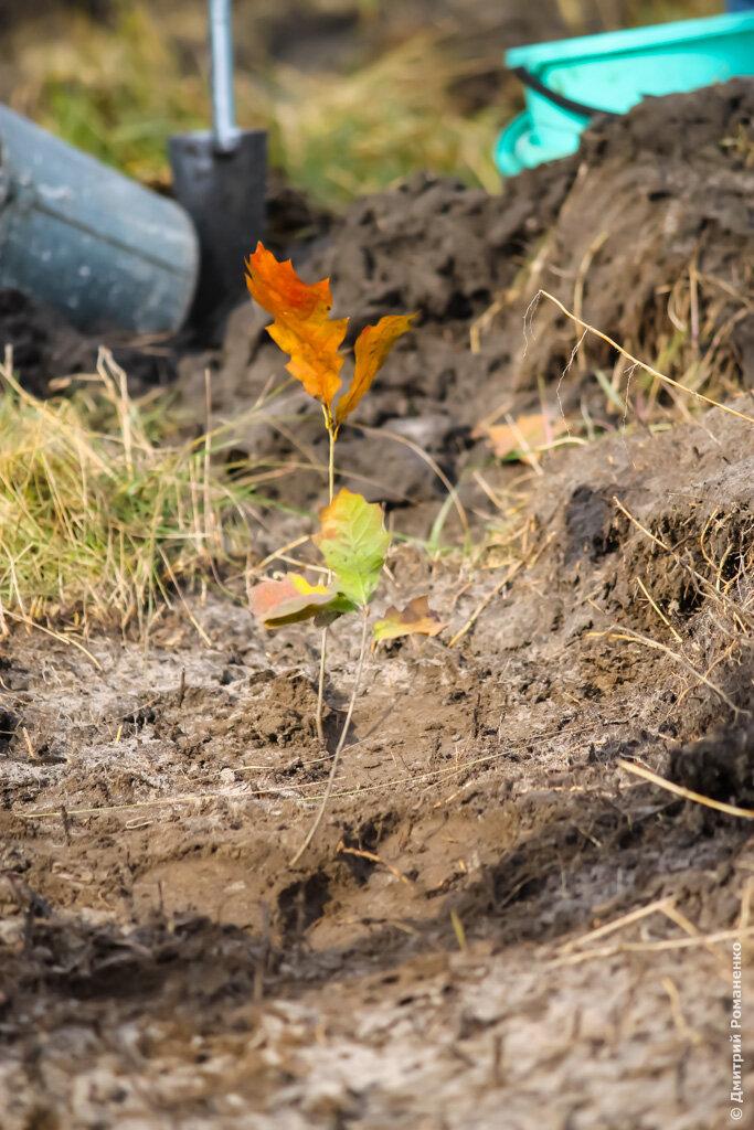 дубовая роща, гора-подол, грайворонский район, белгородская область