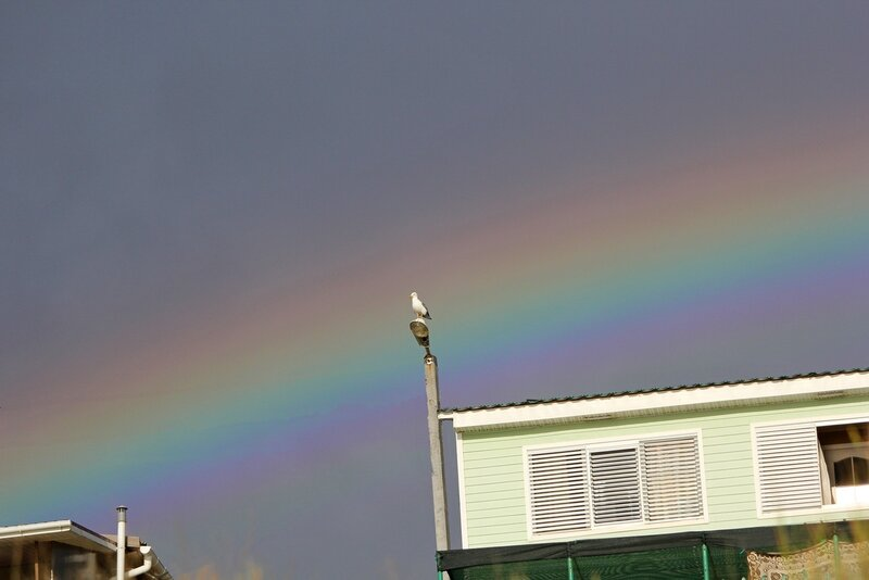 Чайка на столбе на фоне радуги после шторма в Любимовке