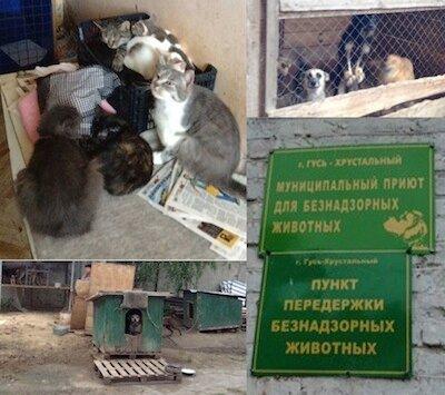 220 собак, 25 кошек, щенки и котята в приюте умирают от голода. г. Гусь-Хрустальный.