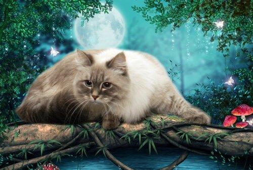 Любимая кошка Ника Милая Невская Тайна
