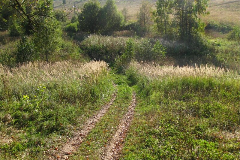 Дорога к ручейку