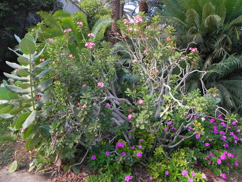 "Ботанический сад кибуца ""Эйн Геди."""