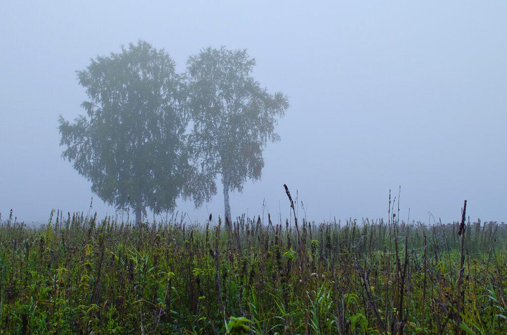 В поле берёзоньки стояли... Фотография снята на зеркалку Nikon D5100 KIT 18-55.