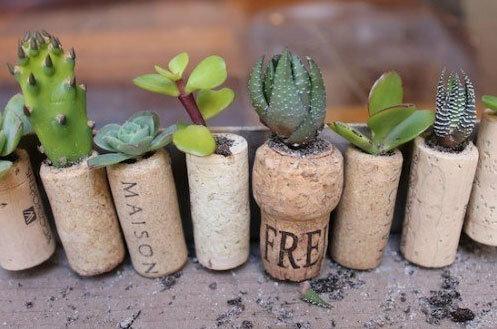 Мини-сад из винных пробок