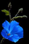 calguisflower28072012.png