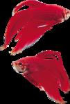 рыба (8).png