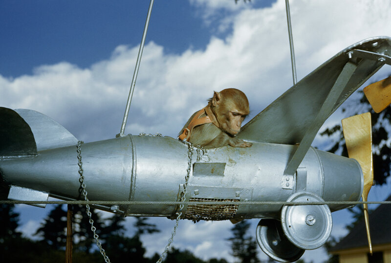 A monkey rides in a model airplane in New Hampshire, January 1951